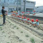 野菜の苗植え (2)